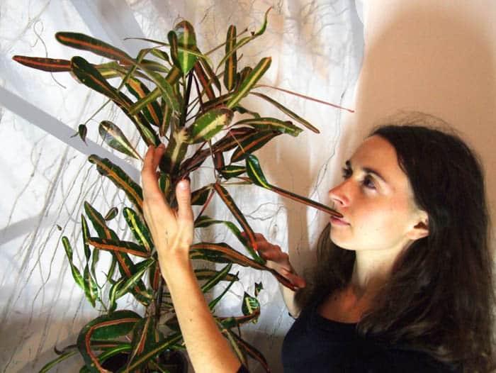 Cum sa vezi aura plantelor