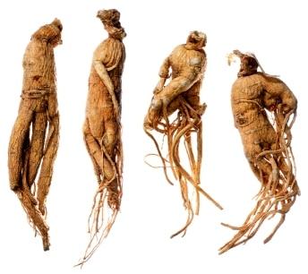 Plantele pentru stimularea sistemului imunitar 6
