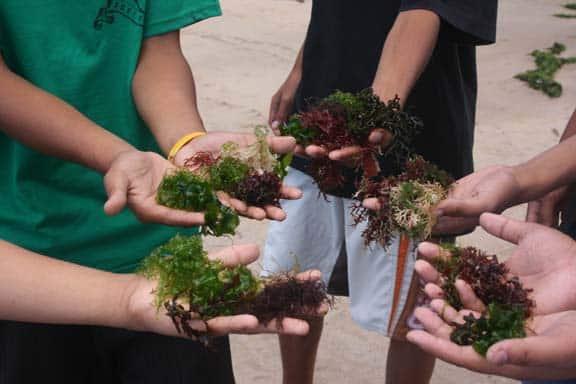 bai medicinale cu alge marine