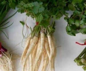 Imaginea thumbnail despre Patrunjelul – remedii naturale cu frunze + reteta vin de patrunjel