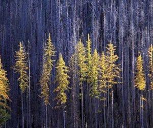 90 Poze cu peisaje - Imagini cu natura pentru sufletul tau 6