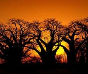 90 Poze cu peisaje - Imagini cu natura pentru sufletul tau 7