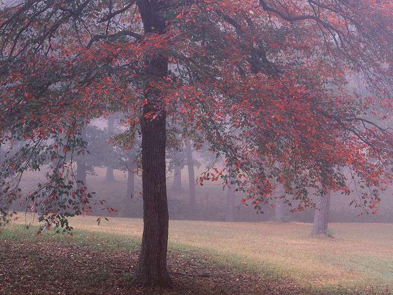 90 Poze cu peisaje - Imagini cu natura pentru sufletul tau 9