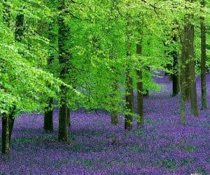 90 Poze cu peisaje - Imagini cu natura pentru sufletul tau 10
