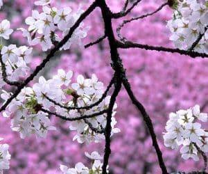 90 Poze cu peisaje - Imagini cu natura pentru sufletul tau 14