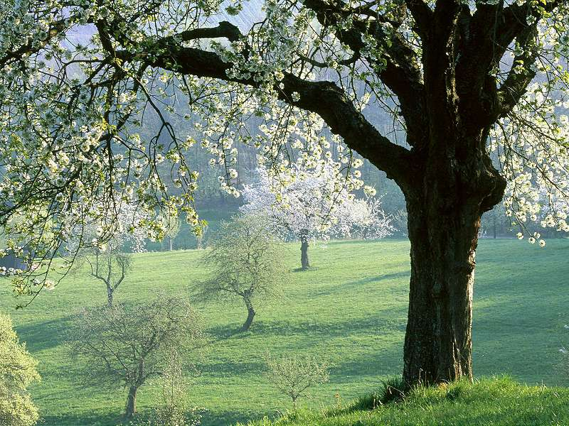 90 Poze cu peisaje - Imagini cu natura pentru sufletul tau 15