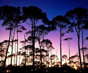 90 Poze cu peisaje - Imagini cu natura pentru sufletul tau 16