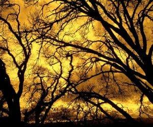 90 Poze cu peisaje - Imagini cu natura pentru sufletul tau 18
