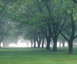 90 Poze cu peisaje - Imagini cu natura pentru sufletul tau 19