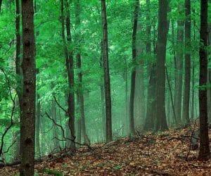 90 Poze cu peisaje - Imagini cu natura pentru sufletul tau 20
