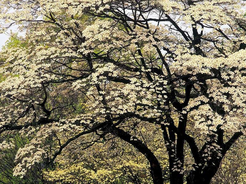 90 Poze cu peisaje - Imagini cu natura pentru sufletul tau 22