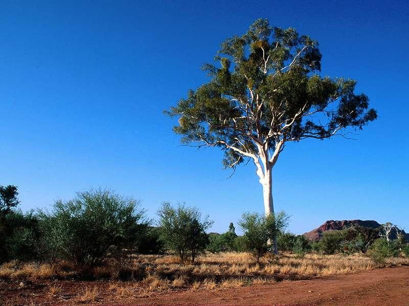 90 Poze cu peisaje - Imagini cu natura pentru sufletul tau 25