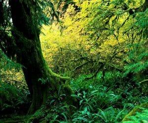 90 Poze cu peisaje - Imagini cu natura pentru sufletul tau 32
