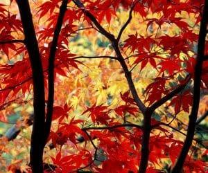 90 Poze cu peisaje - Imagini cu natura pentru sufletul tau 37