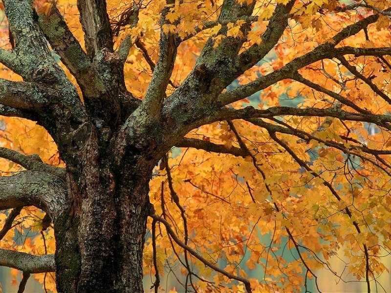 90 Poze cu peisaje - Imagini cu natura pentru sufletul tau 39