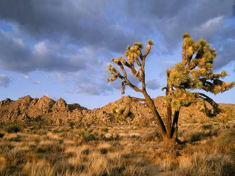 90 Poze cu peisaje - Imagini cu natura pentru sufletul tau 40