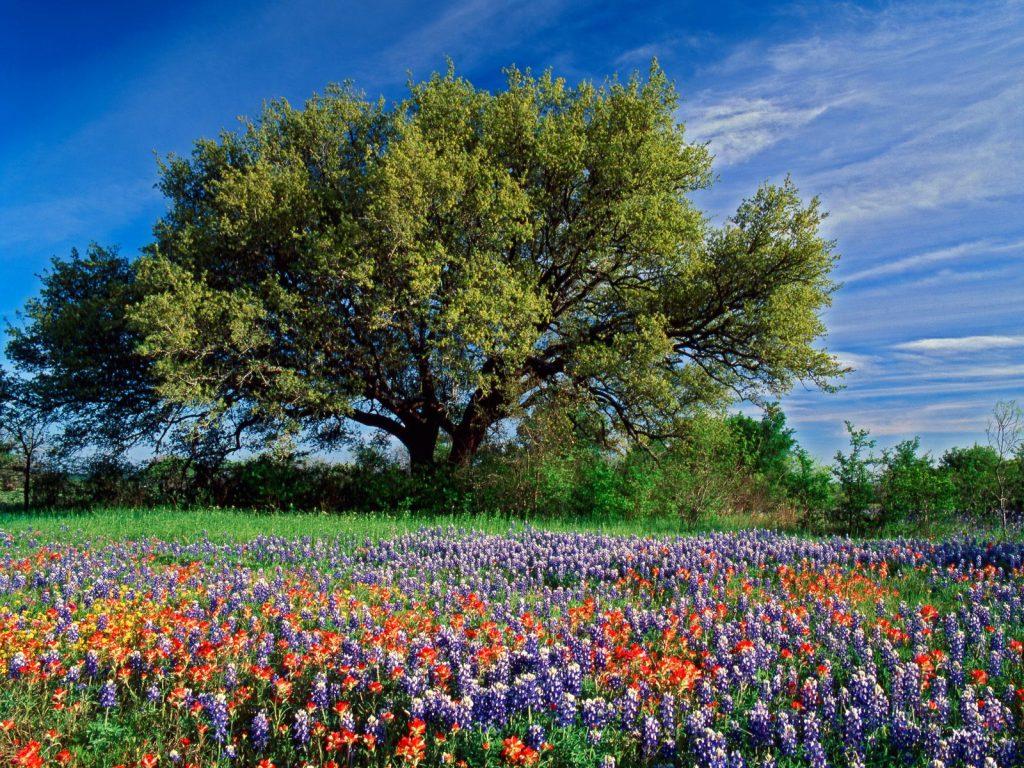 90 Poze cu peisaje - Imagini cu natura pentru sufletul tau 41
