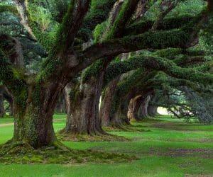 90 Poze cu peisaje - Imagini cu natura pentru sufletul tau 42