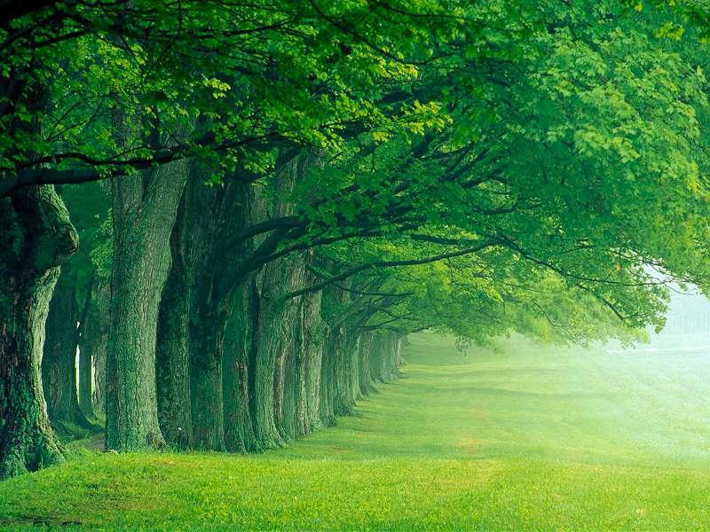 90 Poze cu peisaje - Imagini cu natura pentru sufletul tau 47