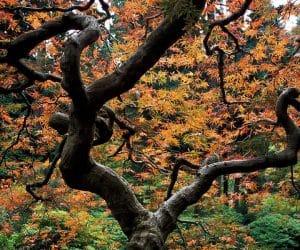90 Poze cu peisaje - Imagini cu natura pentru sufletul tau 48