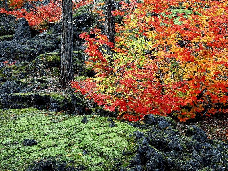 90 Poze cu peisaje - Imagini cu natura pentru sufletul tau 49