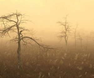 90 Poze cu peisaje - Imagini cu natura pentru sufletul tau 51