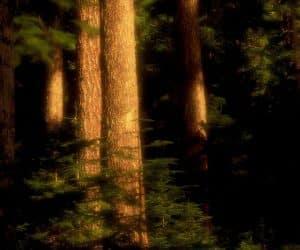 90 Poze cu peisaje - Imagini cu natura pentru sufletul tau 56