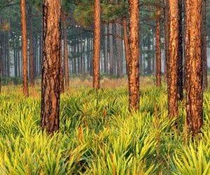 90 Poze cu peisaje - Imagini cu natura pentru sufletul tau 58