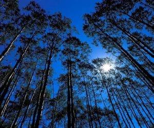 90 Poze cu peisaje - Imagini cu natura pentru sufletul tau 60