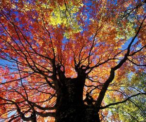 90 Poze cu peisaje - Imagini cu natura pentru sufletul tau 61