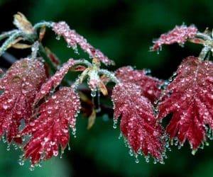 90 Poze cu peisaje - Imagini cu natura pentru sufletul tau 62