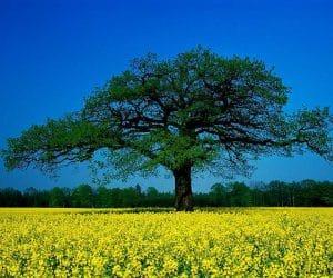 90 Poze cu peisaje - Imagini cu natura pentru sufletul tau 65