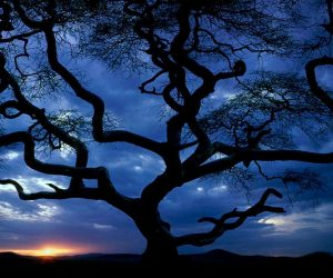90 Poze cu peisaje - Imagini cu natura pentru sufletul tau 66