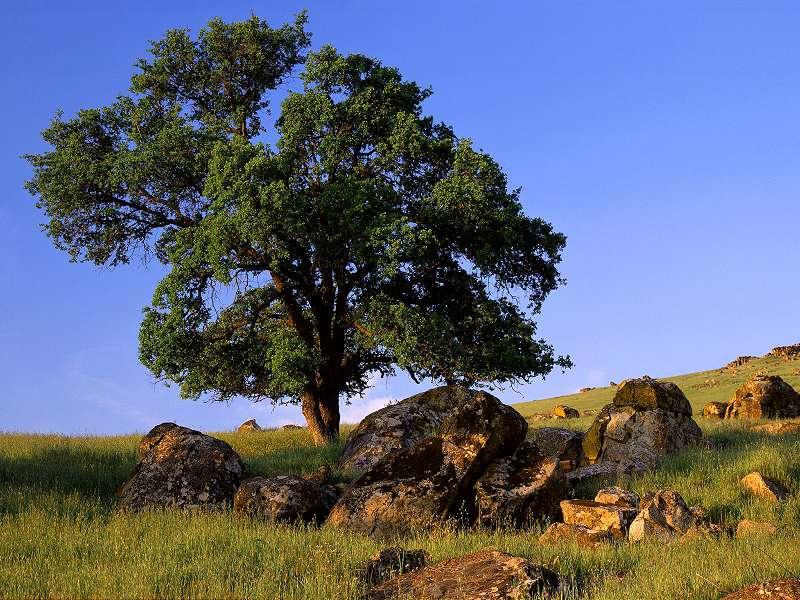 90 Poze cu peisaje - Imagini cu natura pentru sufletul tau 67