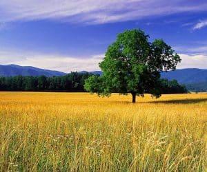 90 Poze cu peisaje - Imagini cu natura pentru sufletul tau 70