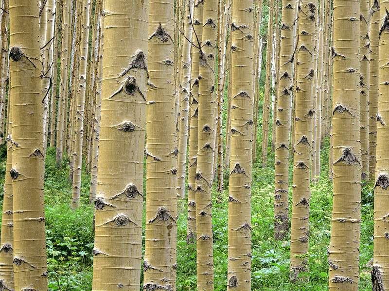 90 Poze cu peisaje - Imagini cu natura pentru sufletul tau 74
