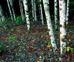 90 Poze cu peisaje - Imagini cu natura pentru sufletul tau 75