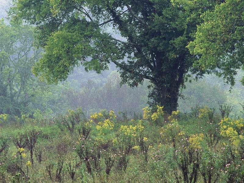 90 Poze cu peisaje - Imagini cu natura pentru sufletul tau 77