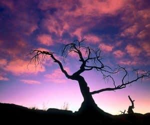 90 Poze cu peisaje - Imagini cu natura pentru sufletul tau 79