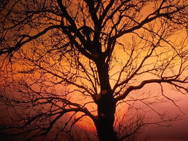 90 Poze cu peisaje - Imagini cu natura pentru sufletul tau 82