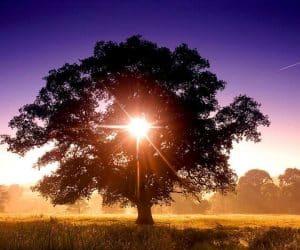 90 Poze cu peisaje - Imagini cu natura pentru sufletul tau 83