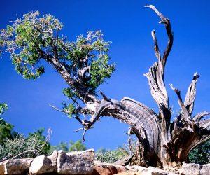 90 Poze cu peisaje - Imagini cu natura pentru sufletul tau 85