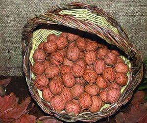 Imaginea thumbnail despre Retete cu nuci preparate din frunze de nuc, coji şi miez de nuca