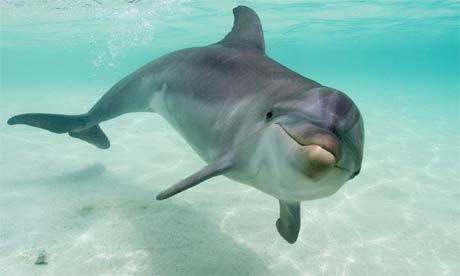 totem delfinul