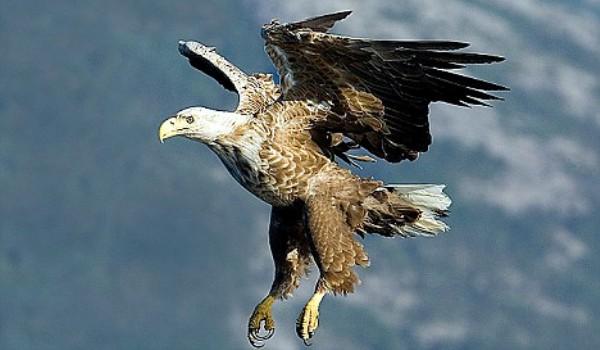 totem vulturul
