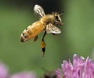 Imaginea thumbnail despre Generalitati, magie, mituri si legende la români despre albina