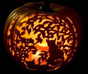 bostan halloween pisica intre crengi