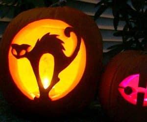 bostan-halloween-pisica speriata