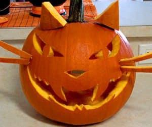 bostan de halloween cap de pisica