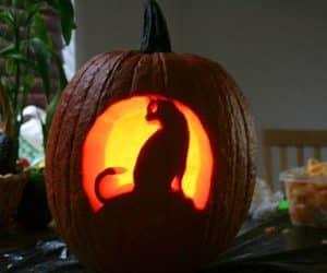 bostan de halloween cu pisica scluptata